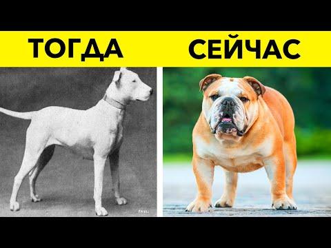 Как изменились собаки за 100 лет? 14 пород собак