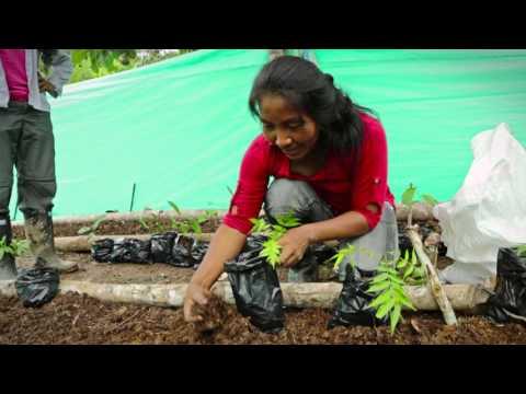 Proyecto de reforestación en Colombia - short version