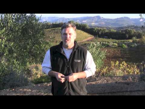 Benziger Family Winery 2014 Olive Harvest