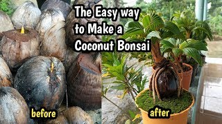 THE  EASY WAY TO MAKE A COCONUT BONSAI