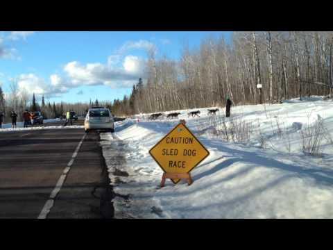 Beargrease Sled Dog Crossing - 2016