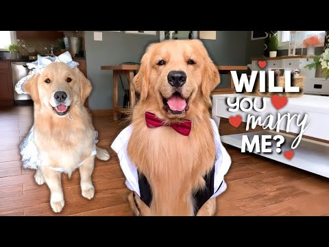 My Dog Gets Married?!