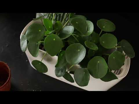 LECHUZA DELTA bepflanzen