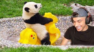 اضحك مع الحيوانات !!     -