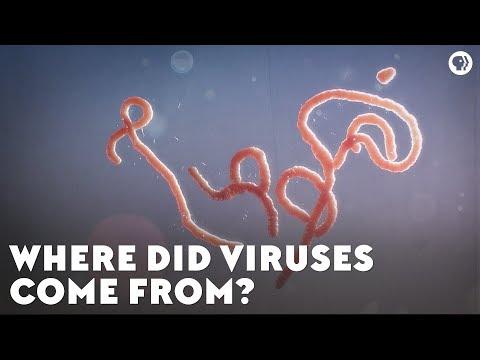 Од каде потекнуваат и што точно се вирусите?