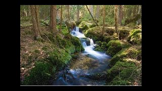 1 Hour of Soothing Nature Sounds in HD Relaxing Sound of Water and Birdsong Meditation