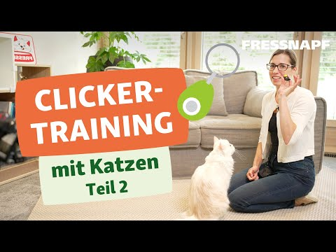Clickertraining mit Katzen Teil 2/2