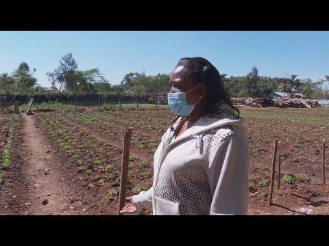 Keniaanse docenten verbouwen groente op het schoolplein