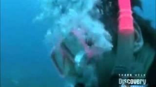 オオメジロザメ25