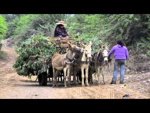 Canete Peru