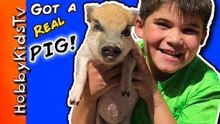 HobbyPig Gets a PIG!