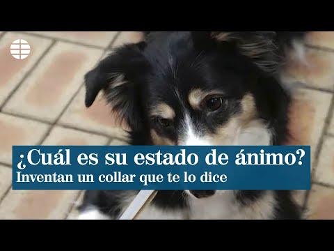 Inventan un collar para perros que te informa de su estado de ánimo
