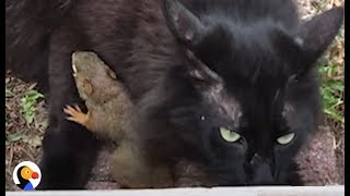 Baby Squirrel Befriends Cat | The Dodo