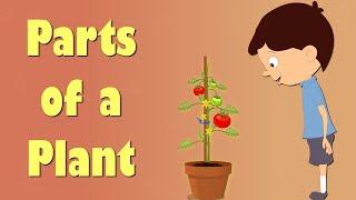 Parts of a Plant | #aumsum #kids #science #education #children