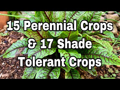 Live Stream Perennial Vegetables & , Plants that Grow in the Shade - (REPLAY) Garden #withme