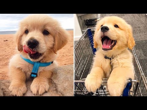 ❤️Cute Puppies Doing Funny Things 2019❤️#1  Cutest Dogs