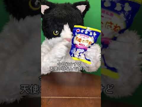 むぎ(猫)「沖縄こんちくわシリーズvol.3天使のはね」