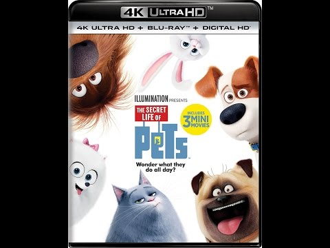 The Secret Life of Pets in 3D