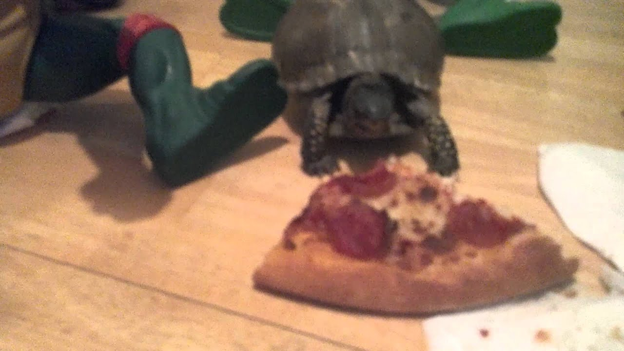 Real Ninja Turtles Eating Pizza Youtube
