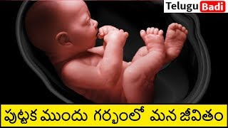 Life Inside the Womb in Telugu  | 9 Months Life Before Birth