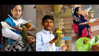 Cockatile Sunconure Chicks Releasing At Tame Birds Farm Colony /  How To Hand Feed Baby Birds Tips.