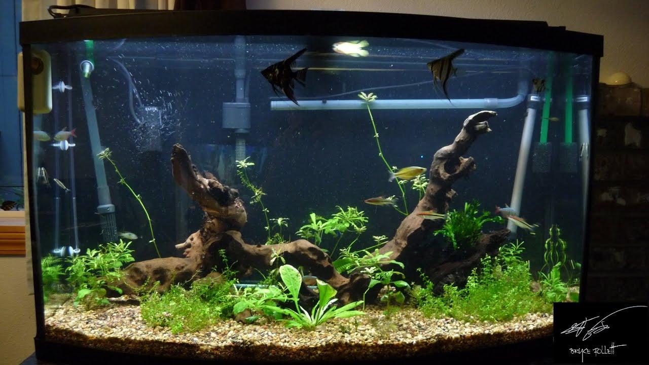 Petstore Employees 46 Gal Bowfront Aquarium Youtube