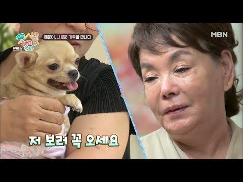 '수미맘', 해운이 새로운 가족의 품으로 보내다 [우리 집에 해피가 왔다 7회]
