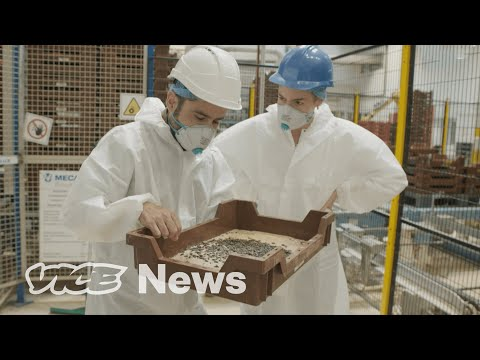 Inside One of the World's Largest Edible Insect Factories