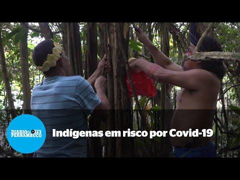 Covid-19 põe indígenas amazônicos em grande risco