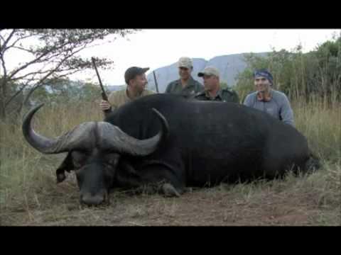 Denis Sarana from Russia taking Buffalo Bull