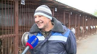 В Омске резко возросло количество бездомных собак