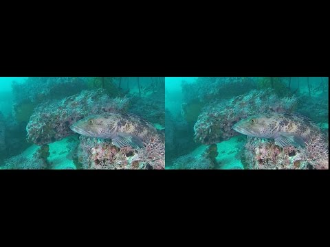 Dive 420: Boulders and Fish YT3D