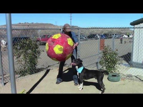 HENRY...Soccer Dog