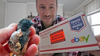 We bought rare breed hatching eggs from eBay. Will ANY of them hatch?