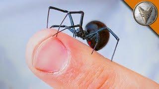 WILL IT BITE?! - Black Widow Challenge