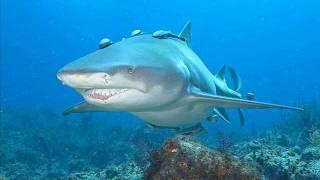 鮫スライドショー8