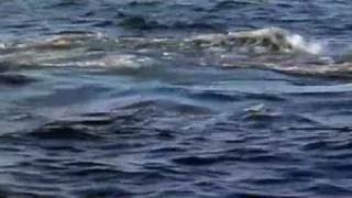 Documental tiburon blanco parte 2