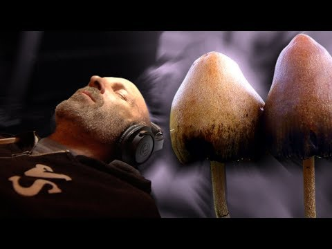 Denver Just Decriminalized Magic Mushrooms. Activists Say This is Just the Beginning.