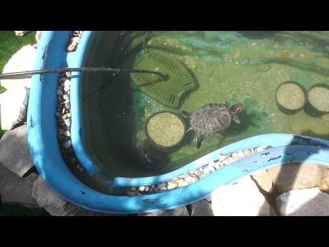 Tortuguera estanque casera de exterior para dos tortugas for Estanque tortugas
