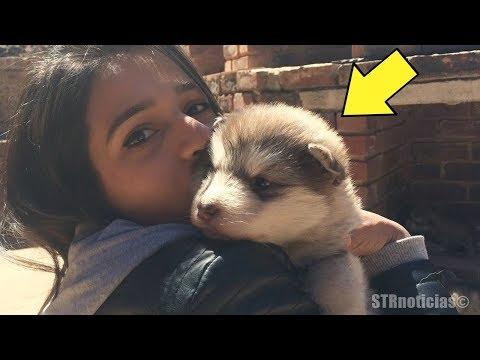 Mujer llevó un diminuto y adorable perrito a su casa, pero cuando mira en que creció quedó aturdida.