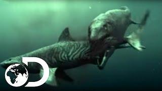 サメとモササウルス