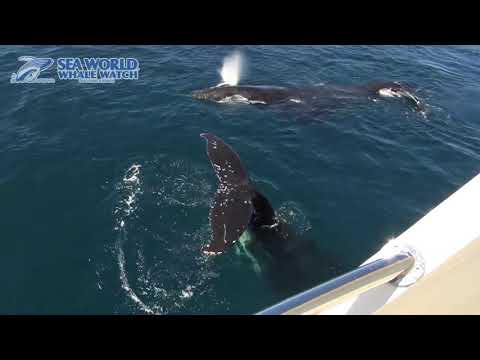 video Sea World Whale Watch