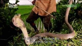 Hành Trình Truy Tìm Rắn Độc ở Việt Nam