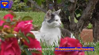 Cats are very funny - Laugh with cute little cats laughed until the crying