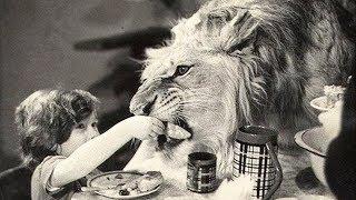 Что случилось с семьей у которой был огромный домашний лев