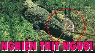 Cá Sấu SIÊU KHỔNG LỒ Làm Hại 300 NGƯỜI Đáng Sợ Nhất Hành Tinh