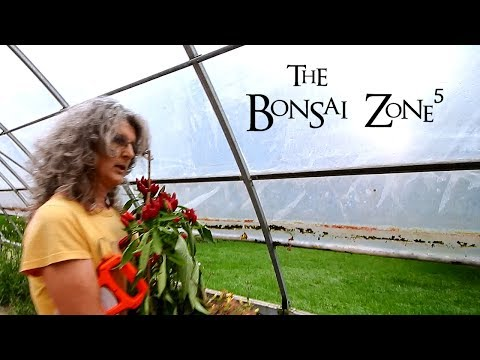 The New Greenhouse, The Bonsai Zone, Oct 2018