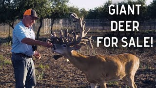 Return to Lone Hollow | Deer and Wildlife Stories