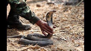 How To Subdue A Cobra