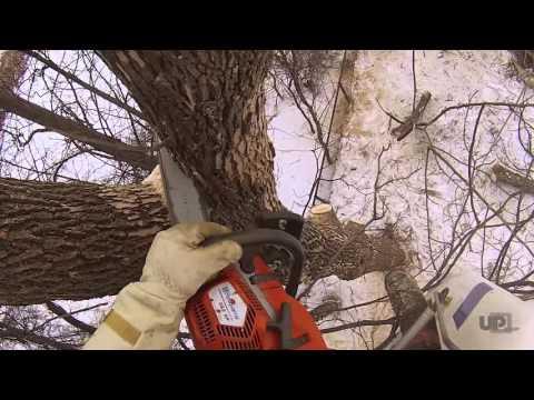 Tree Removal in tight backyard Easy Lift 59-30AJ